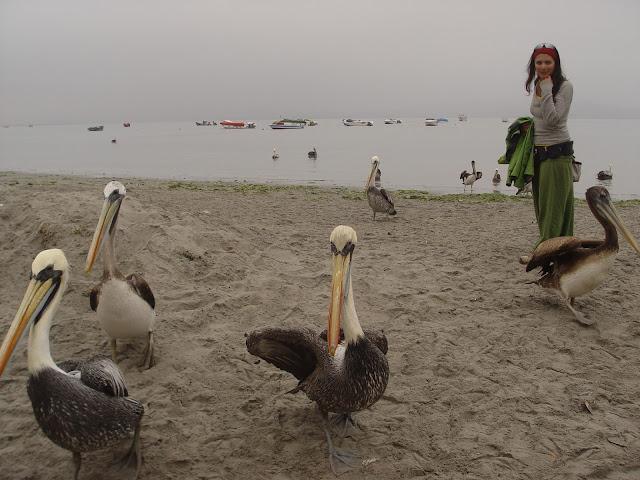 Visitar a Reserva Nacional de PARACAS, um expoente da beleza da natureza   Peru
