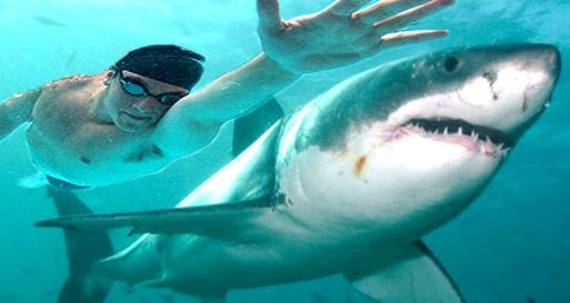 Video: Olympian Michael Phelps loses race against Great White Shark