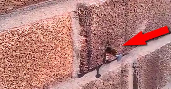 Super Abelha puxa um prego de uma parede de blocos