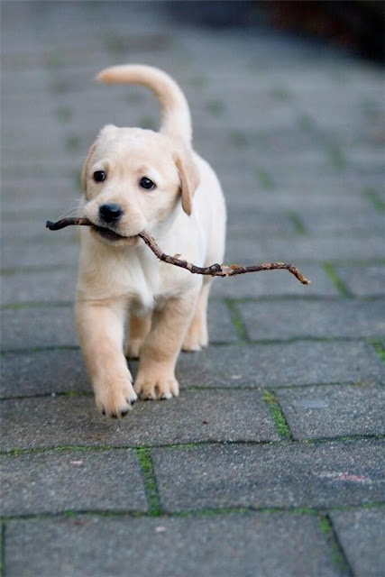 """Cuộc chiến vĩ đại mang tên """"Con chó và khúc cây"""""""