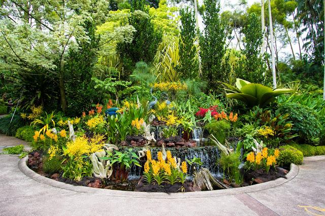National Orchid garden-Botanic gardens-Singapore
