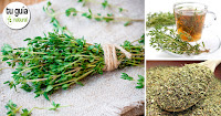 https://steviaven.blogspot.com/2018/04/beneficios-tomillo-salud.html