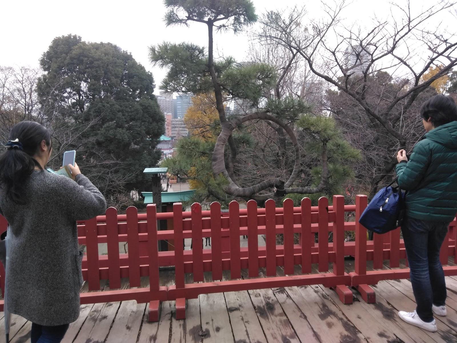 千駄木菜園