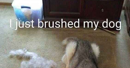 I Brushed My Dog and Made a new One