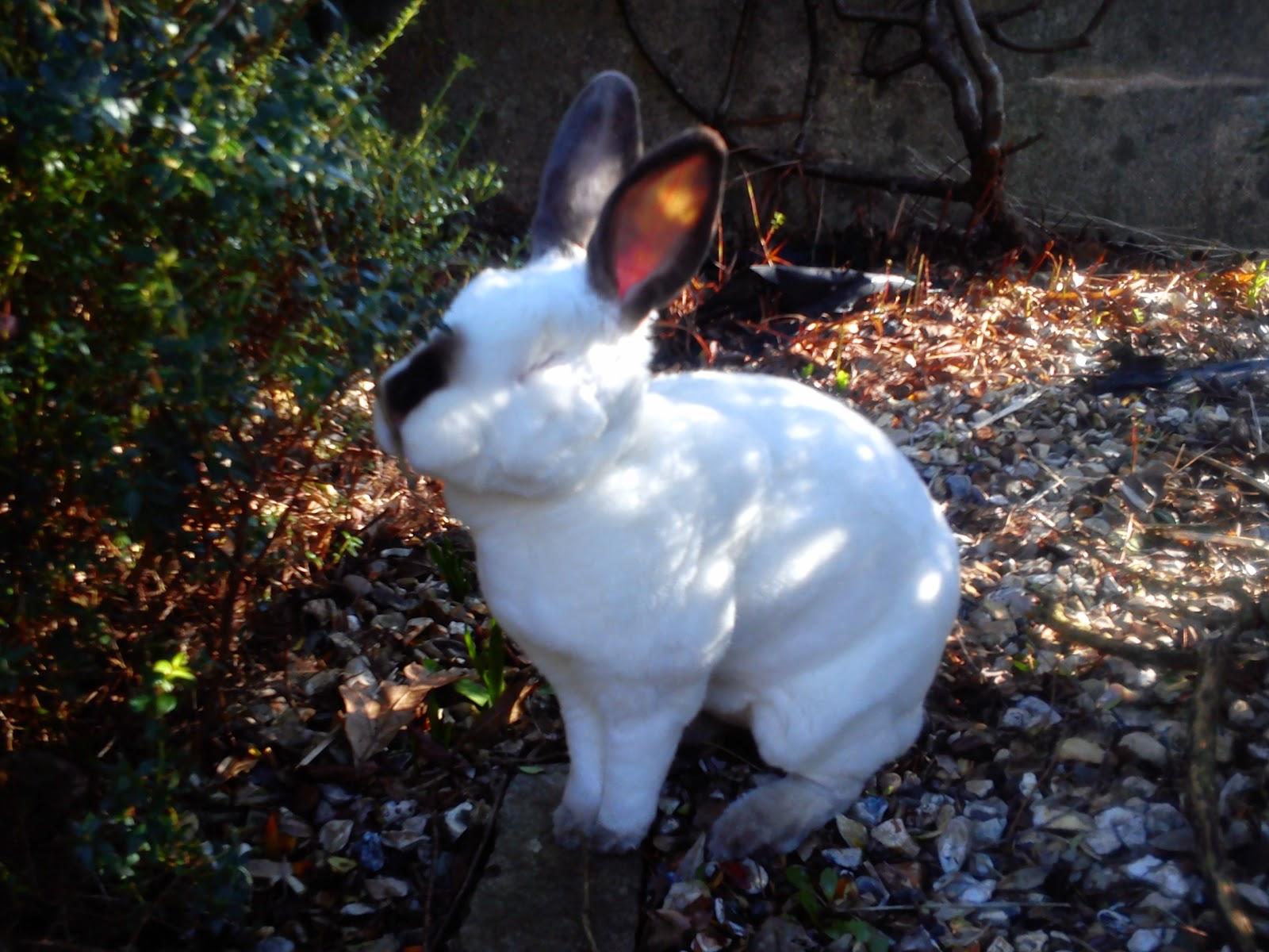 Speedy the cheeky house bunny: Sunday Selfie    its a lovely