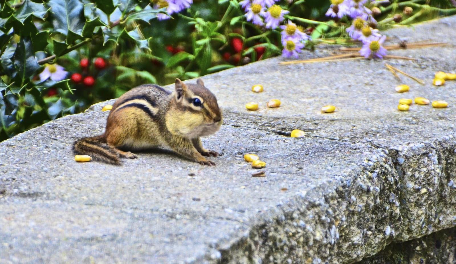 missing moments: Critter complaints