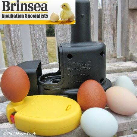 A Brinsea OvaScope Egg Candler!