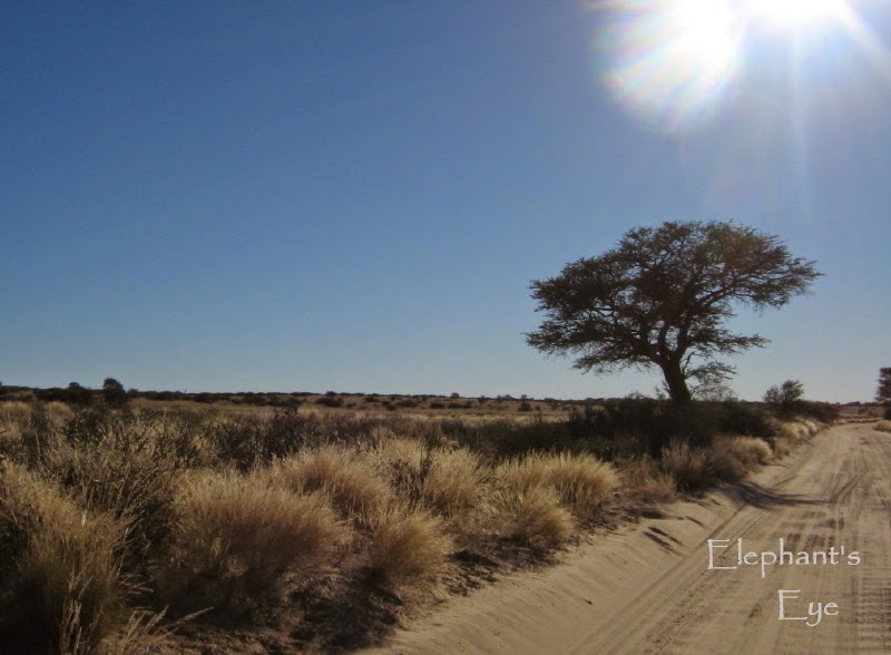 Morning sun on a Kgalagadi road