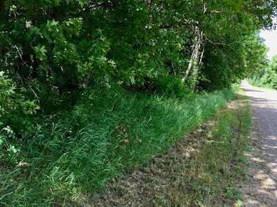 freshly mown roadside ditch