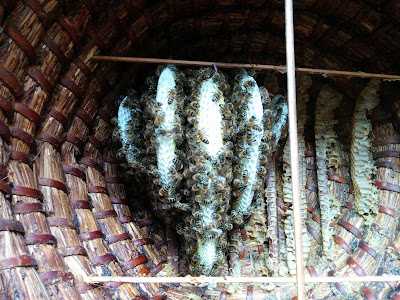 bijenvolk wasproductie