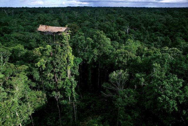 Case sugli alberi della tribù dei Korowai in Indonesia