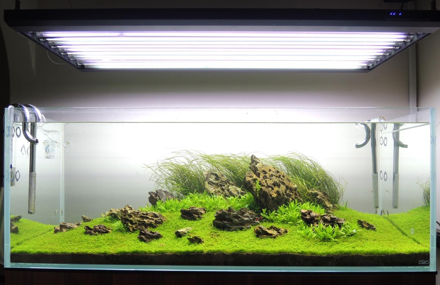 Bạn đếm xem có bao nhiêu đèn trong bể thủy sinh này