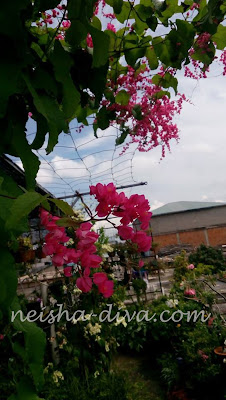 Air Mata Pengantin (Rumah Bunga Neisha)