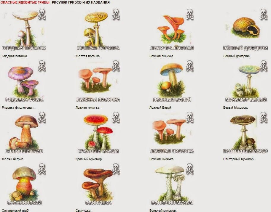 Грибы для детей в картинках | грибы приморья.