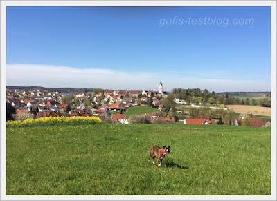 Blick nach Kloster Scheyern