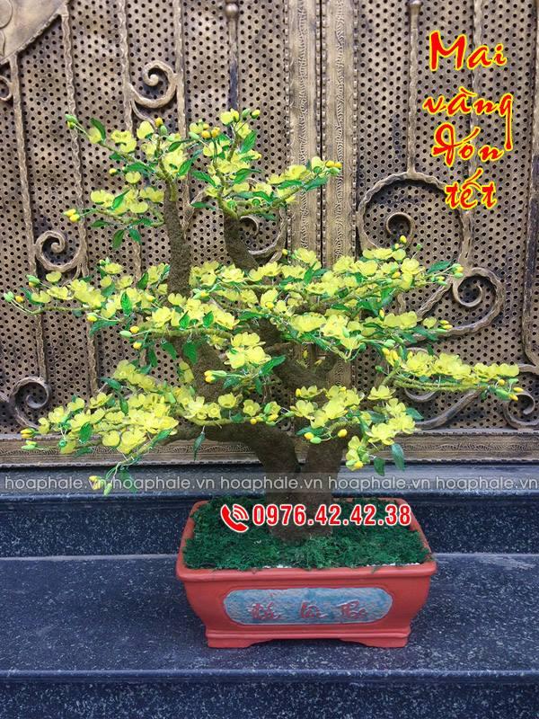 Goc bonsai mai dao o Vu Huu Loi