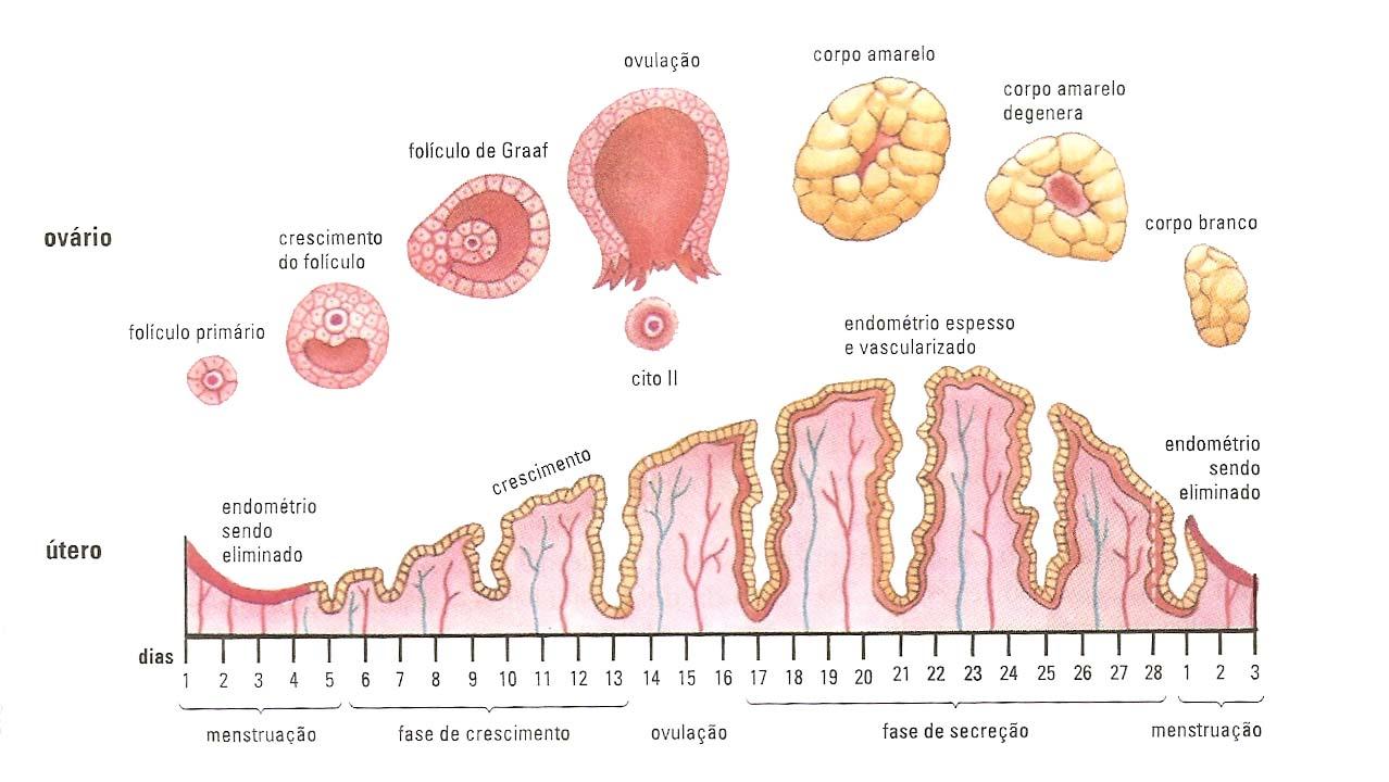 Blog de Biologia do Professor Douglas SENNA: Gráfico do