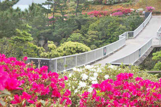 bridge, azalea, ocean, forest