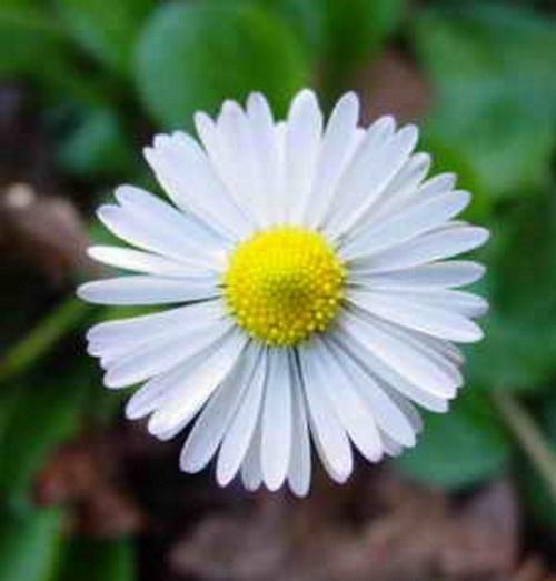Flor sorriso. #PraCegoVer