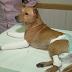 Cachorro arremessado de igreja é colocado para adoção após cirurgia