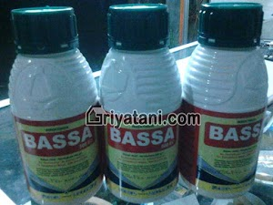 Insektisida BASSA 500EC