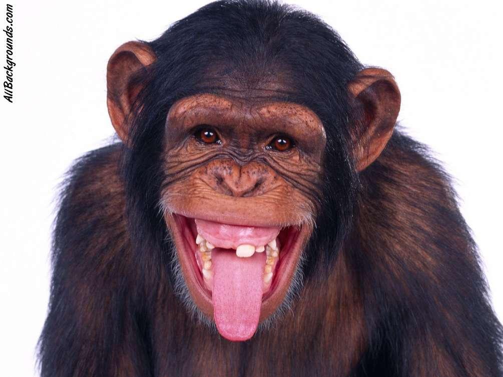 hilarious monkeys -#main
