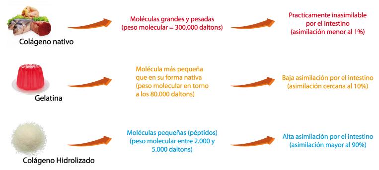 El col geno en nuestra dieta col geno hidrolizado - Alimentos con colageno hidrolizado ...