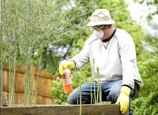 Cara menyemprotkan Pestisida yang benar
