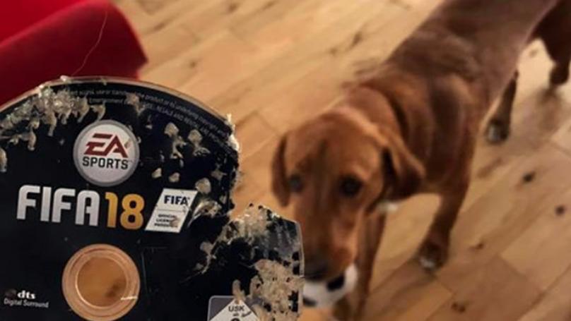 Mascota se come copia de FIFA 18 y Amazon decide enviar una nueva