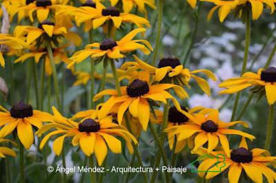 Plantas, diseño jardines, jardinería, flores, paisajismo