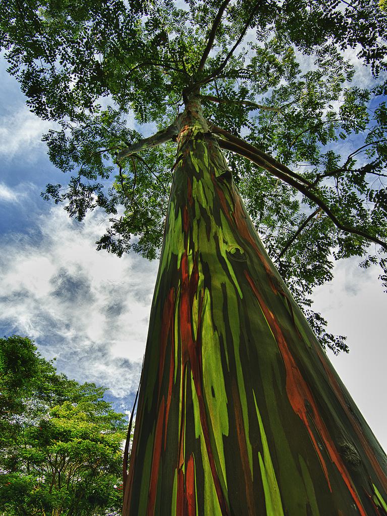 Árvore de Natal em cores 100% natural!