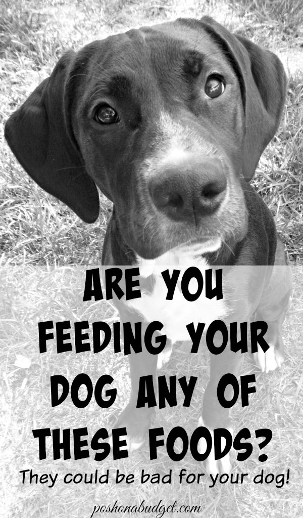 Don't Feed These To Your Dog!