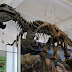 Museum Edukasi : Museum Geologi Bandung