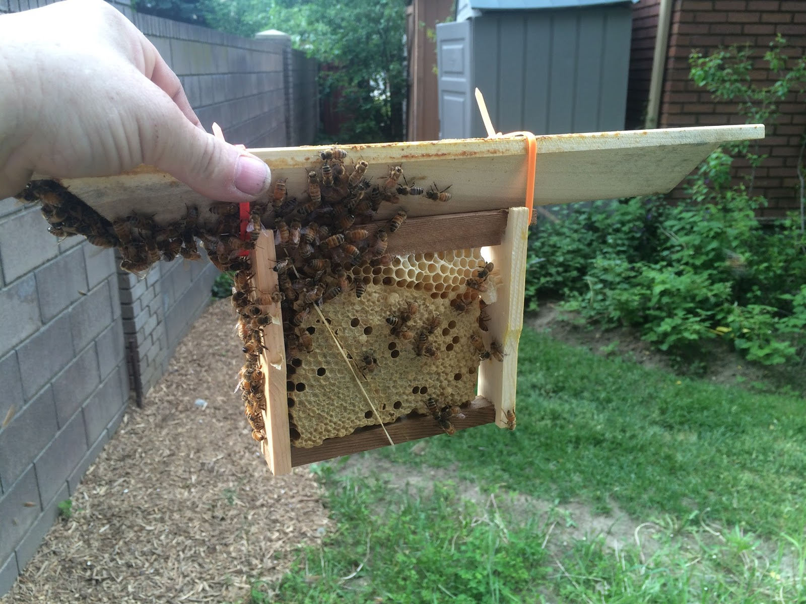 how to save a colony with an eco bee box 26 frame comb brood