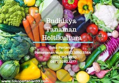menanam tomat di polybag,polybag adalah,polybag artinya,polybag atau pot,polybag di surabaya,polybag hidroponik,polybag media tanam,polybag sidoarjo