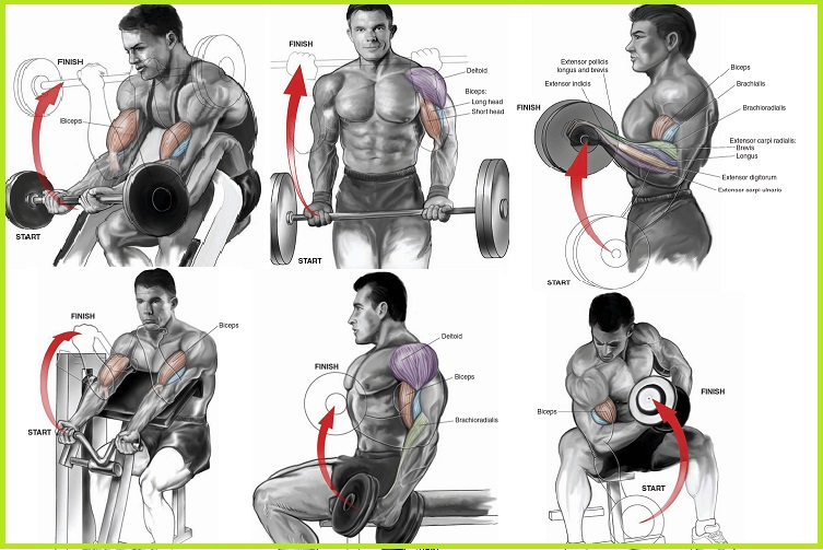 Killer Bicep Workout Will Explode Your Arm Size - all