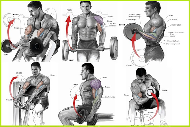 Killer Bicep Workout Will Explode Your Arm Size All