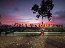 Wisata Kebun Buah Mangunan, Bantul Yogyakarta