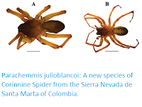 http://sciencythoughts.blogspot.co.uk/2017/07/parachemmis-julioblancoi-new-species-of.html
