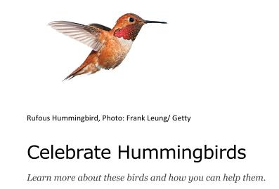 https://www.audubon.org/features/celebrate-hummingbirds