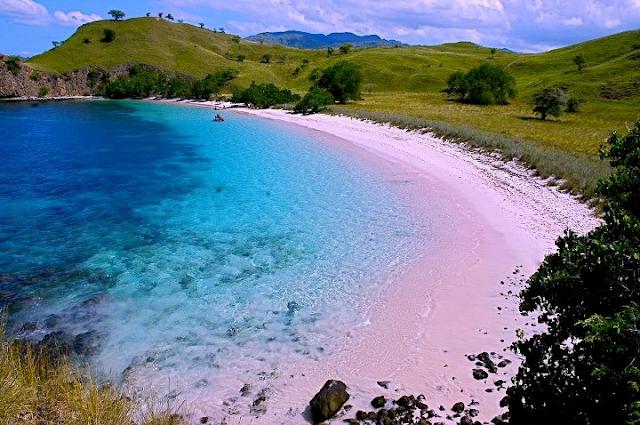 Pantai%2BPink%2Bdi%2BPulau%2BKomodo Inilah 10 Pantai Paling Indah Di Indonesia Yang Wajib Kamu Kunjungi
