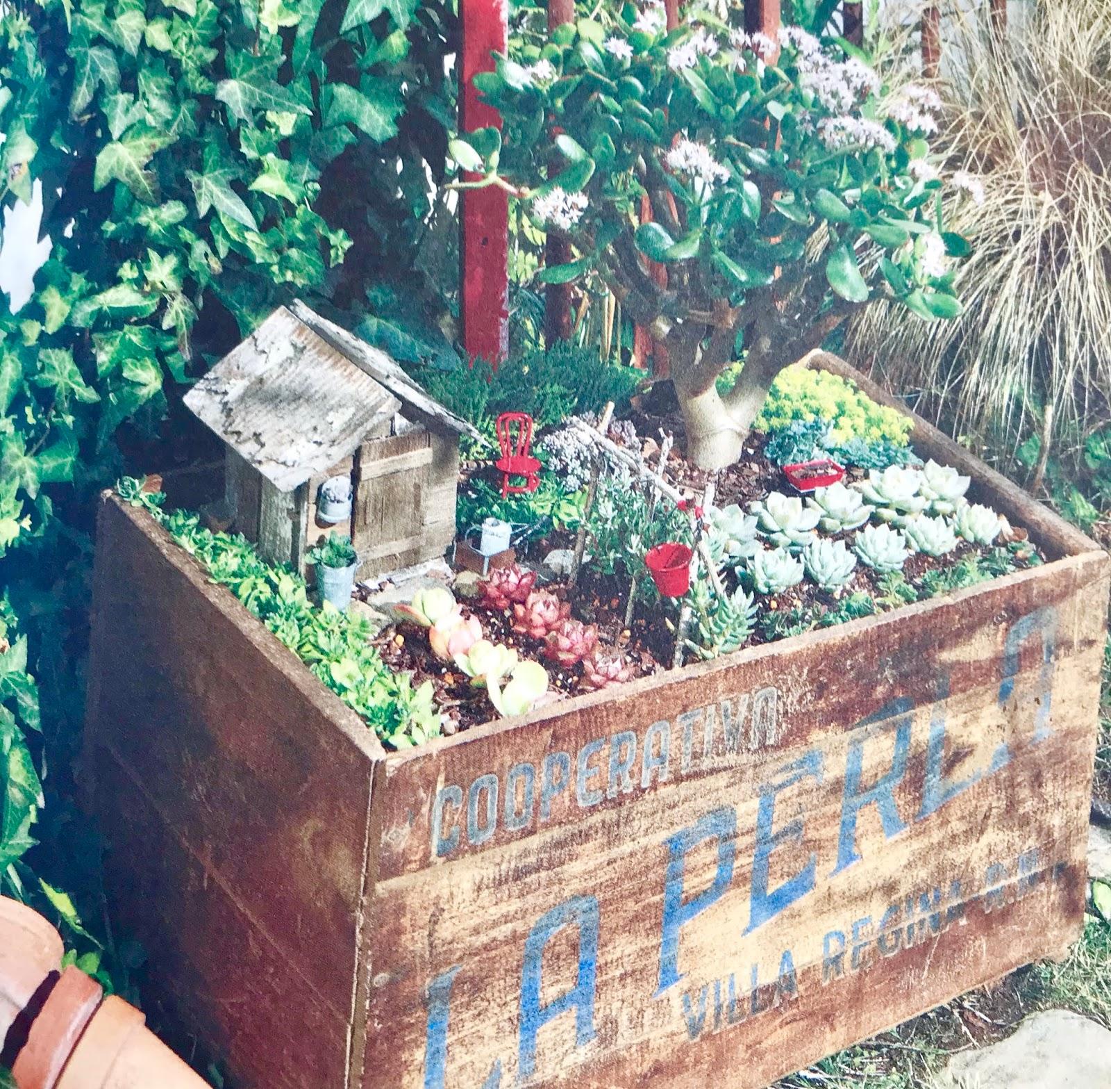 mon coup de c ur lecture mini jardins de succulentes. Black Bedroom Furniture Sets. Home Design Ideas