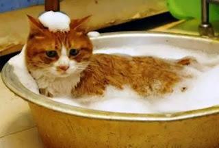 Daftar Harga Grooming Terbaru di Salon Kucing