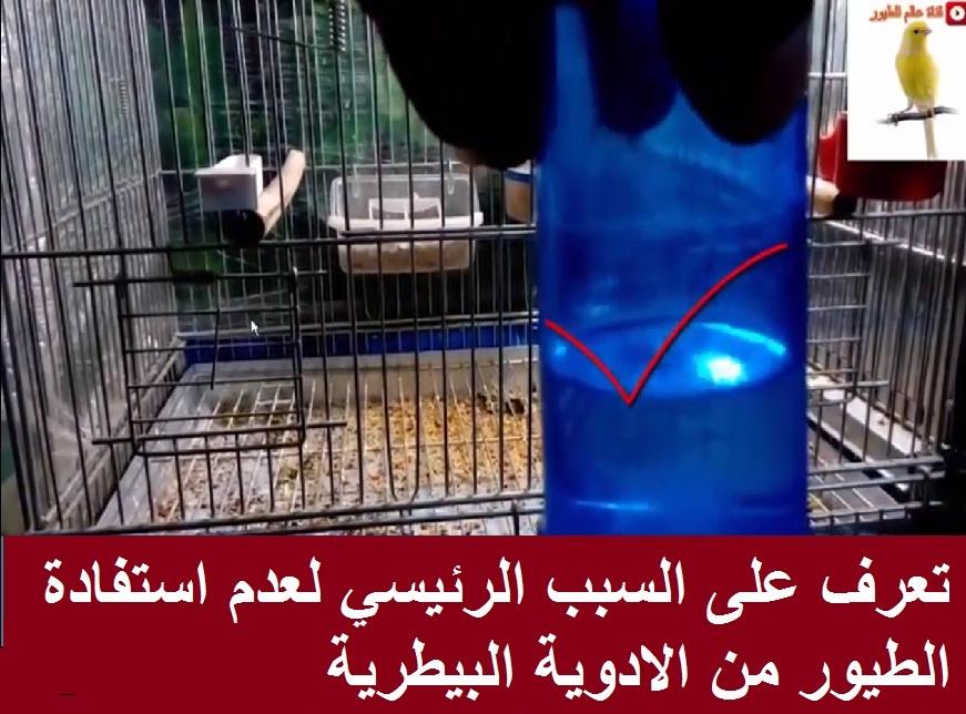 سبب عدم استفادة الطيور من الادوية البيطرية