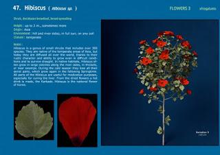 3dsMax高精度鮮花植物3D模型下載