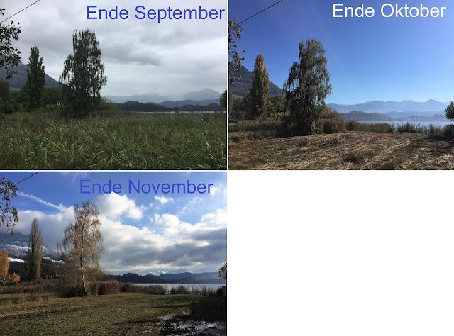 Blick ins Ried vom September bis November