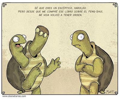 tortugas y el feng shui · conloscohosentidos.es