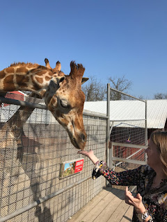 Feeding the giraffe at Wild Wilderness Drive Through Safari in Gentry, Arkansas