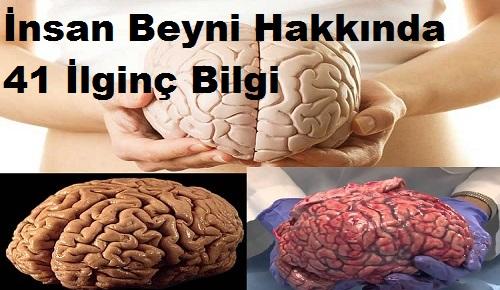 İnsan Beyni Hakkında 41 İlginç Bilgi