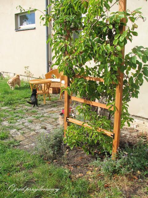 Ogrodowe strefy relaksu